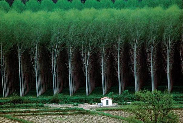 árboles acomodados en perfecto orden