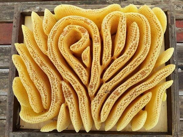 Coral acomodado con perfecta simetría