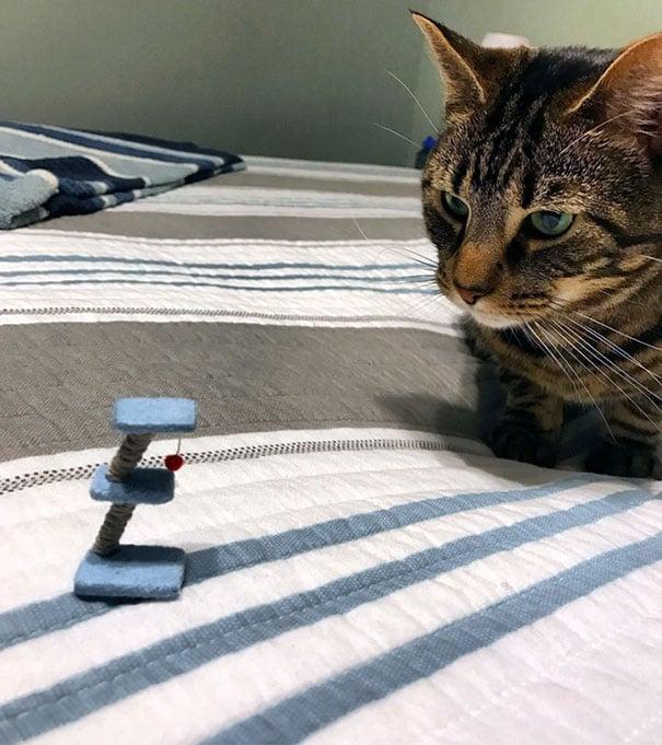 Mesa de juegos para un gato