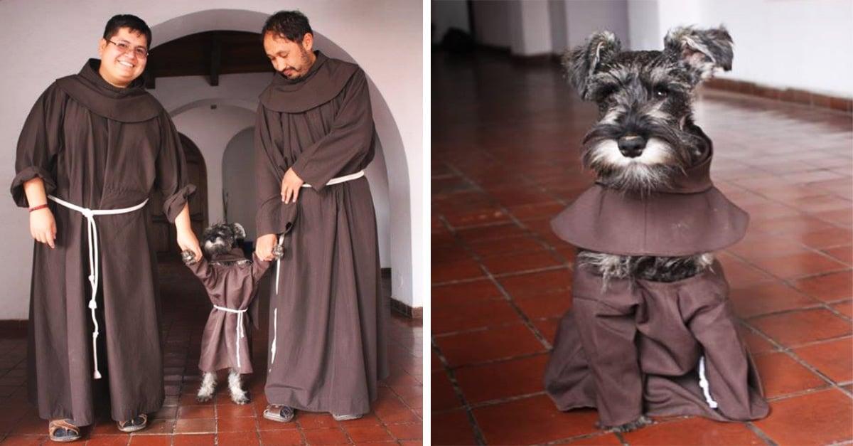 Fray Bigotón el afortunado schnauzer que fue adoptado por un monasterio