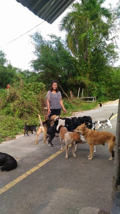 Mujer tailandesa alimenta perros