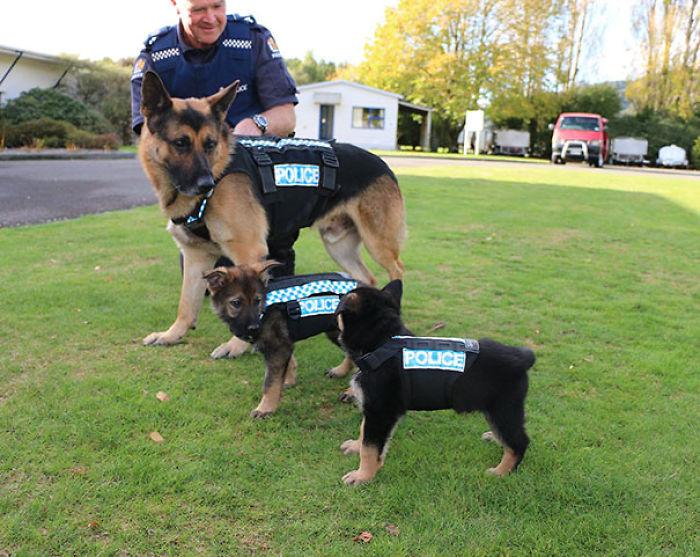 perros entrenando