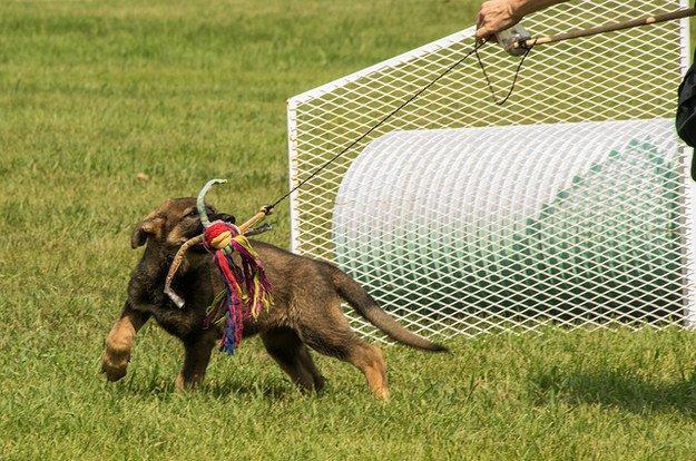 perro entrenando