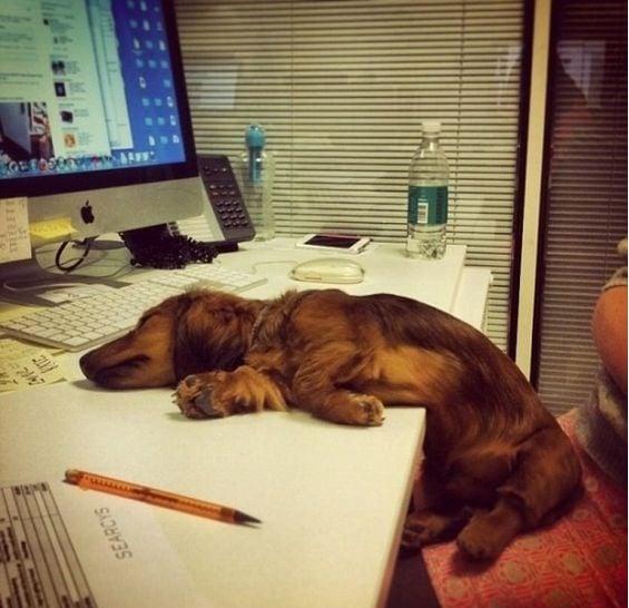 perro en oficina