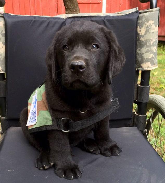 perro en una silla