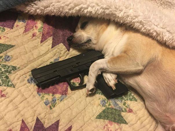 Perro sosteniendo una arma
