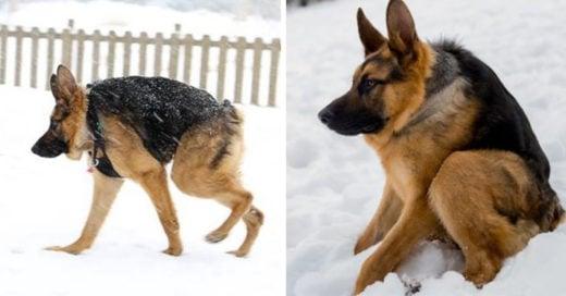 Conoce a Quasimodo, el perro con joroba que todos quieren adoptar
