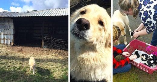 Esta perrita perdió a sus cachorros en un accidente, pero el destino le tenía una sorpresa