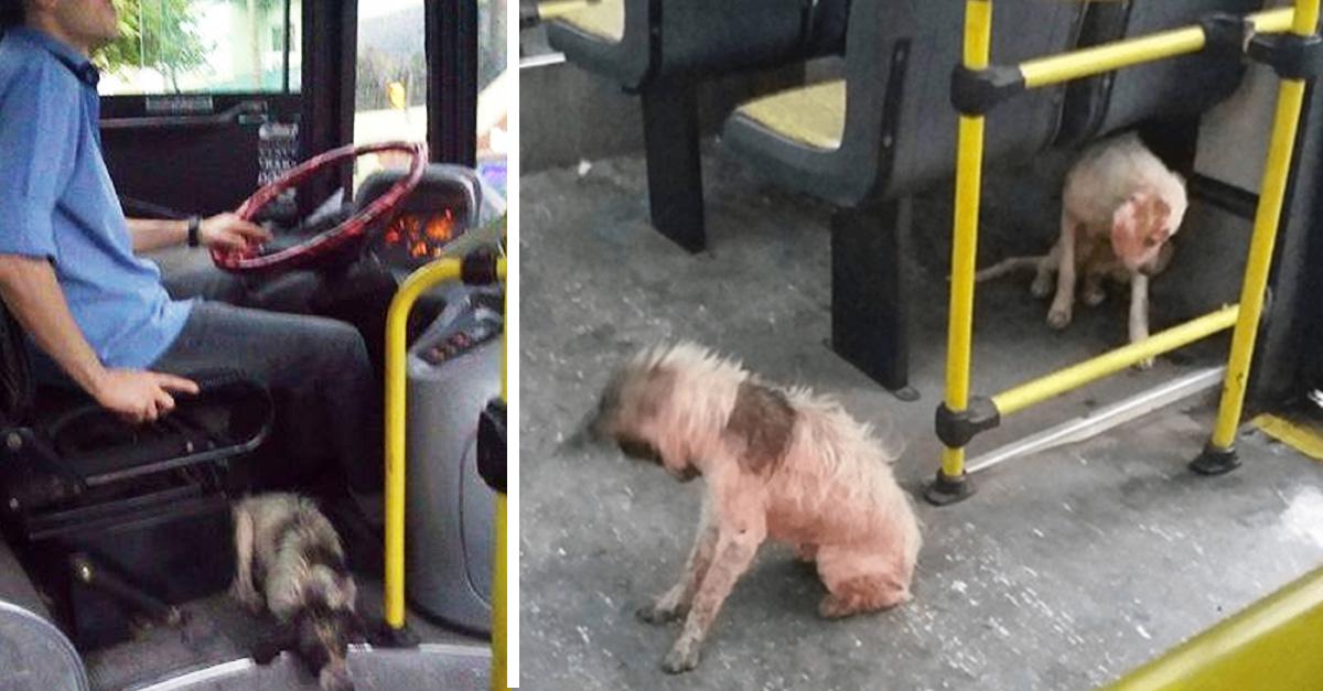Valiente conductor de autobús arriesga su empleo para salvar a dos perritas callejeras