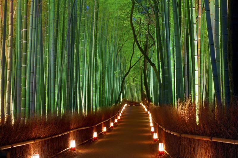 bosque de bambú, kyoto, japón