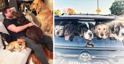 Este chico dedica su vida a rescatar cada perro que encuentra en la calle
