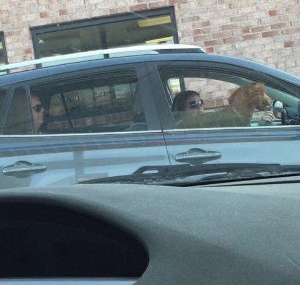 Mujer paseando al perro en el carro