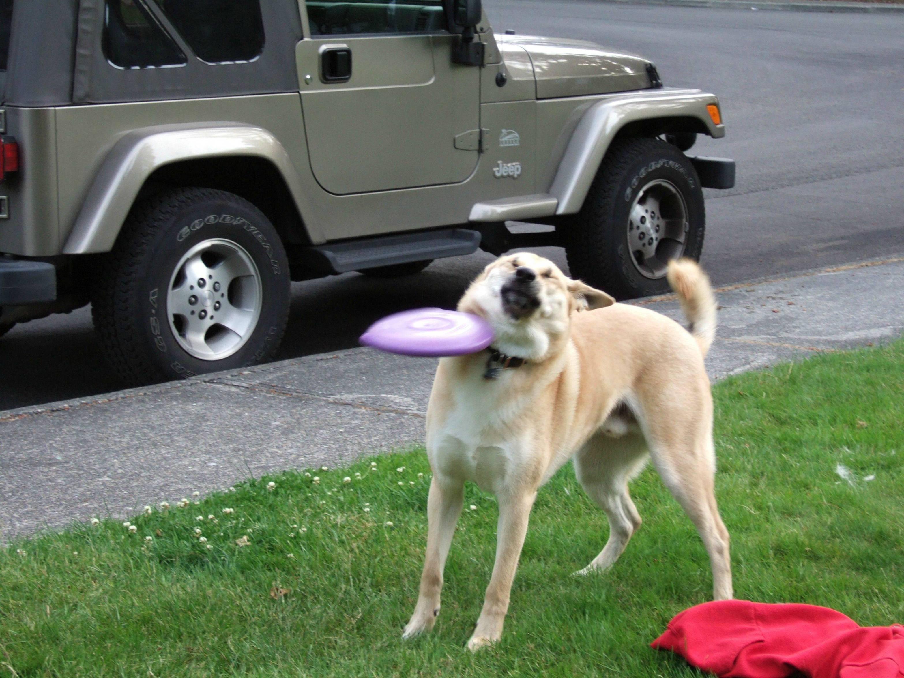 cuidado con el freezbee