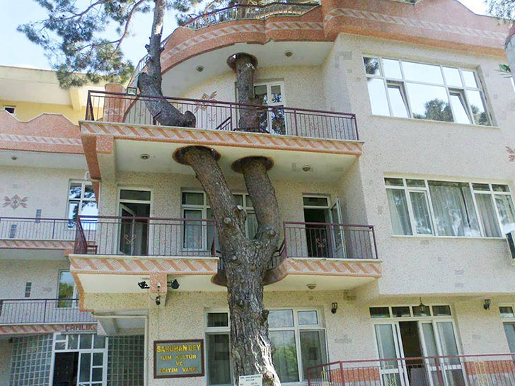 edificio con árbol