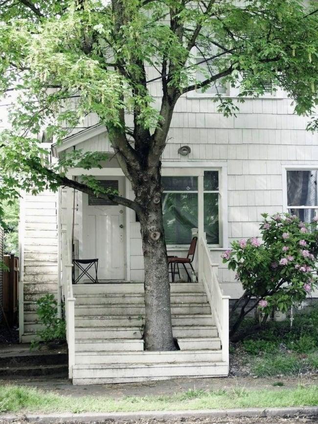 escalera con árbol