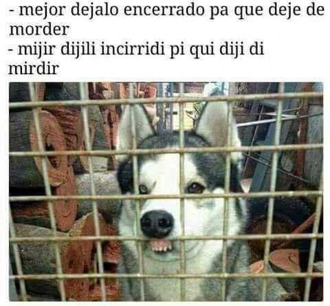 perrito con dientes de fuera en jaula