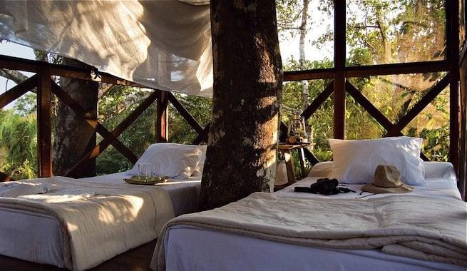 hotel con árbol