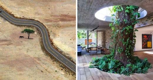 20 increíbles imágenes que muestran la importancia de respetar la naturaleza