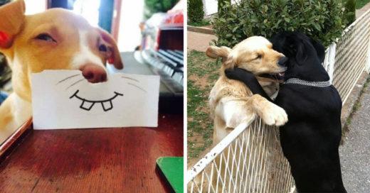 20 Divertidas imágenes que demuestran por qué amamos tanto a los perros