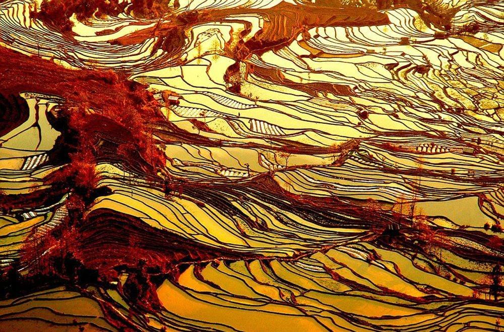 las terrazas de arroz en china