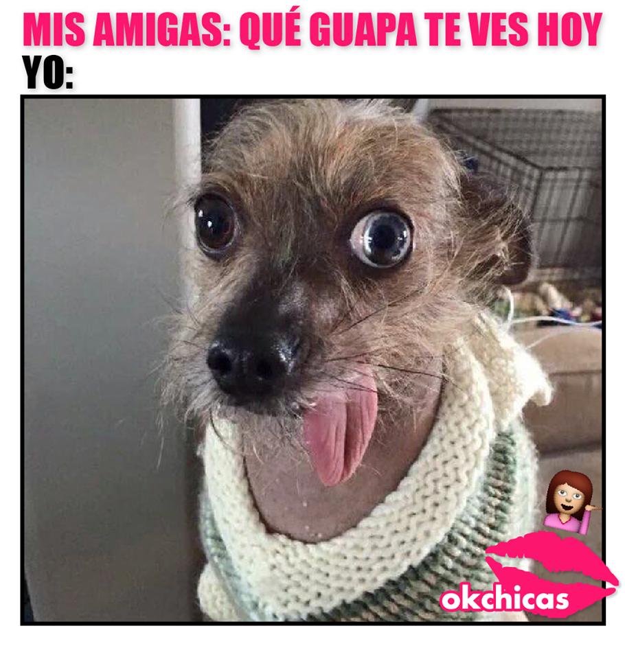 memes okchicas perros 13 20 memes de perros que te harán llorar de la risa