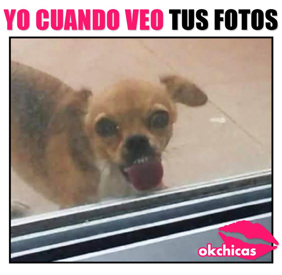 memes okchicas perros 16 20 memes de perros que te harán llorar de la risa