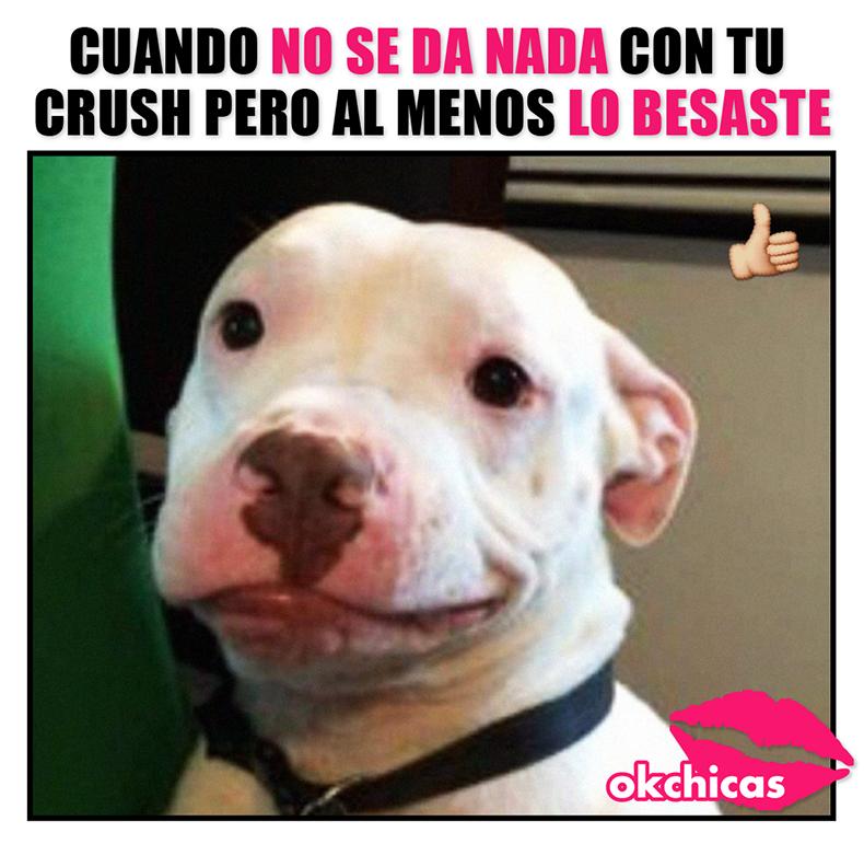memes okchicas perros 18 20 memes de perros que te harán llorar de la risa