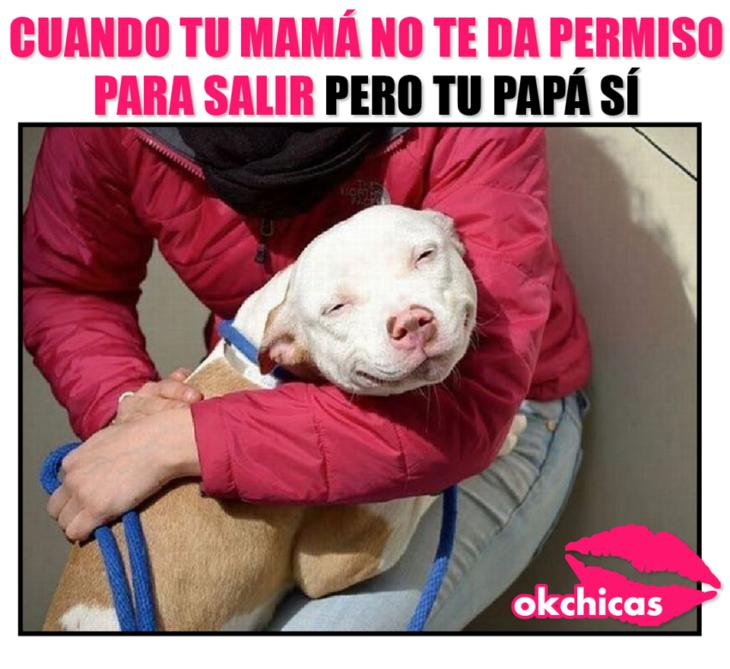 Meme okchicas de perritos