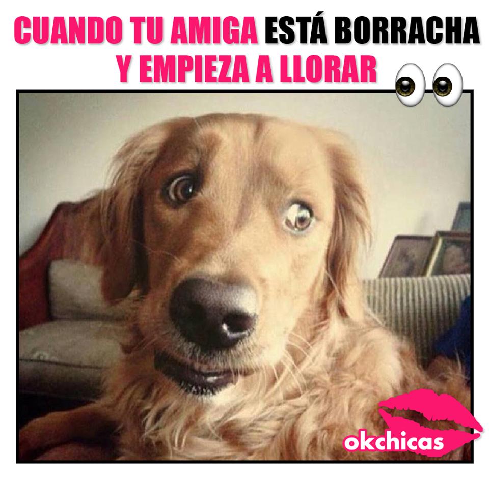 memes okchicas perros 7 20 memes de perros que te harán llorar de la risa