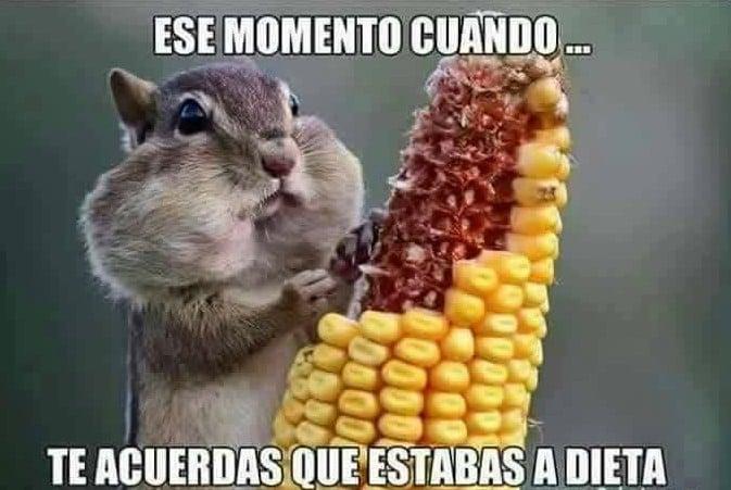 momento recuerdas dieta
