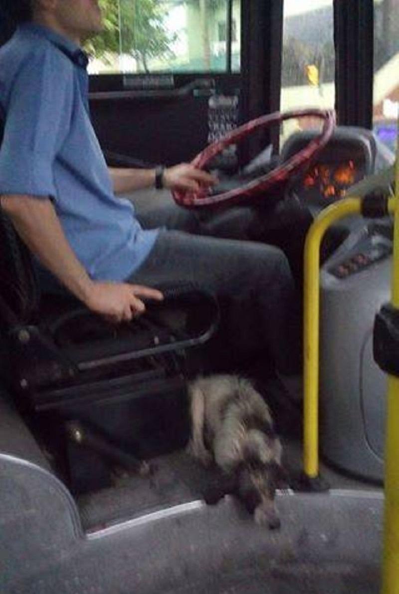 chofer salva perritos en argentina