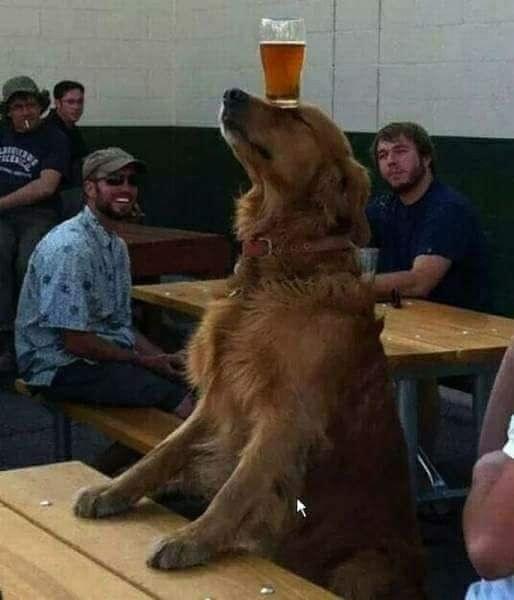 perrito carga cerveza con nariz