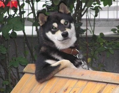 perrito con estilo