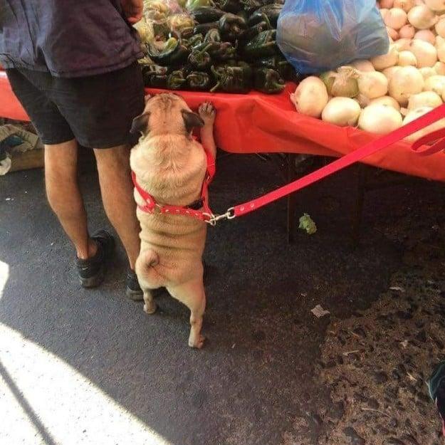 perrito en frutería
