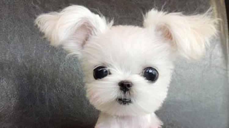 perrito hermoso