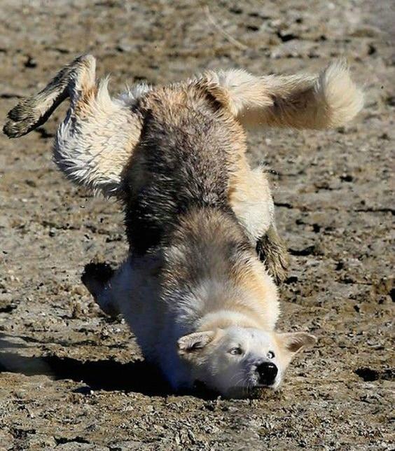 perrito se cae