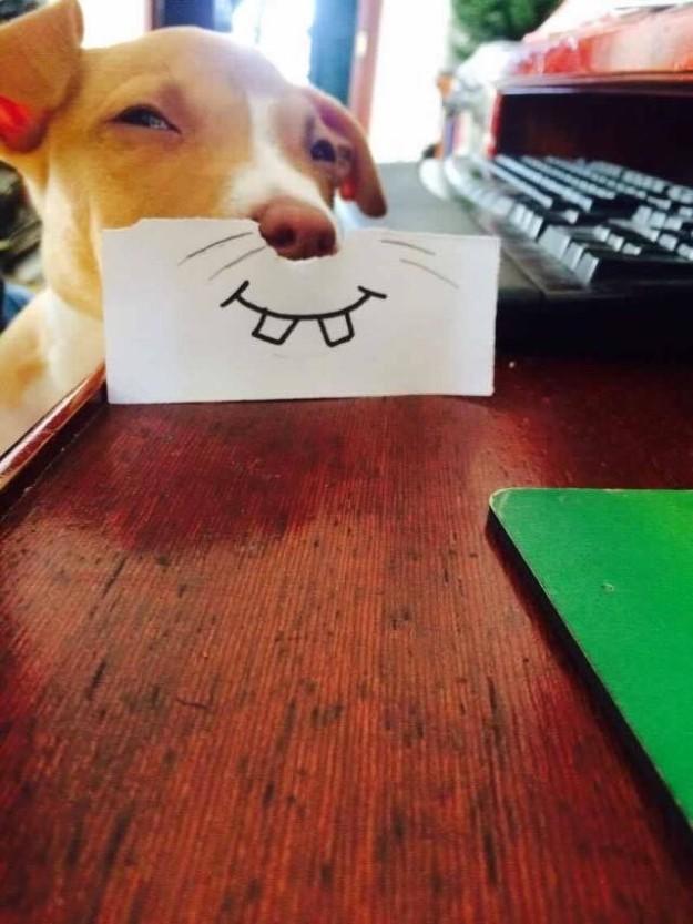 perrito sonrisa rara