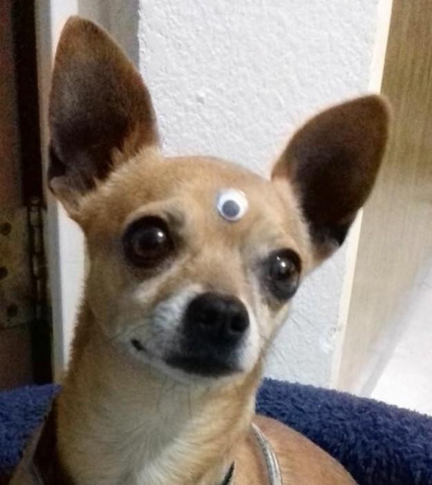 perrito tercer ojo