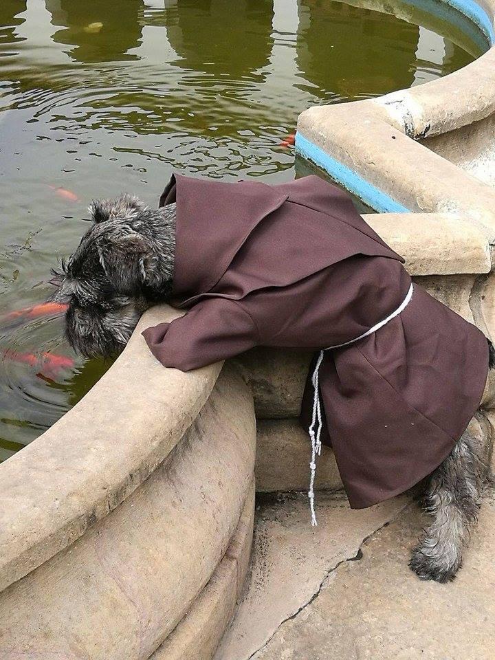 hermoso perrito tomando agua