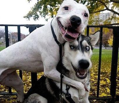perritos amistosos