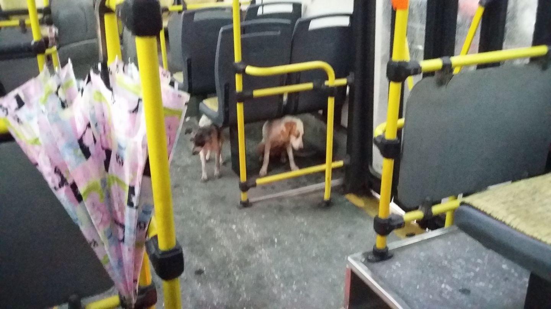 perritos con miedo en autobús en argentina