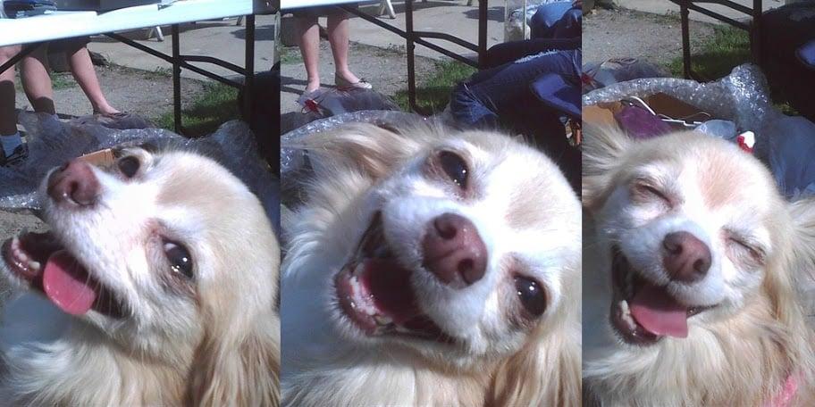 perro ultra feliz