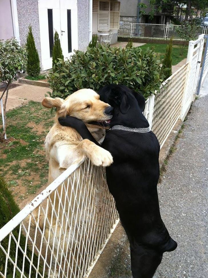 perros abrazados 2