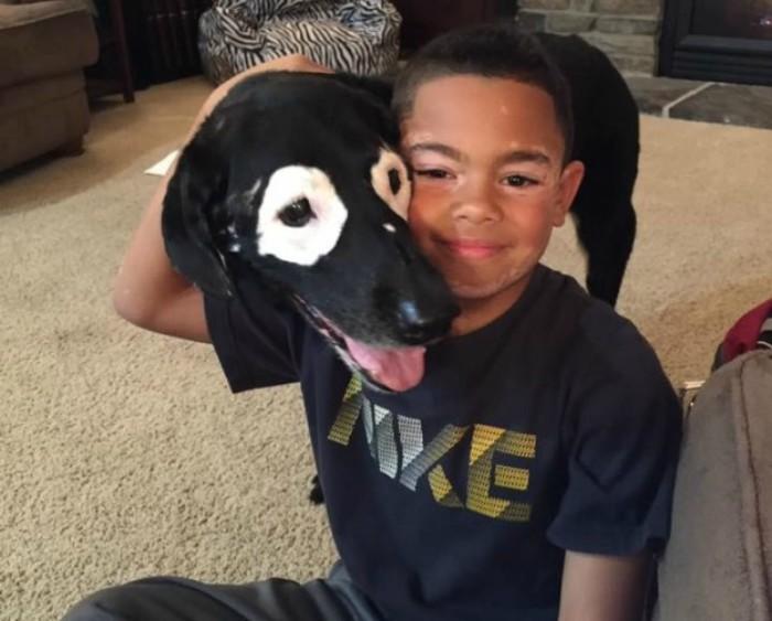 perro junto a perro con manchas blancas