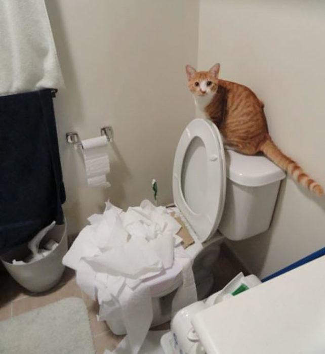 gato taza de baño