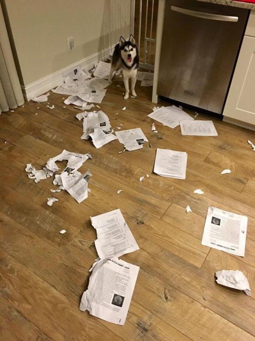 perro rompio las hojas
