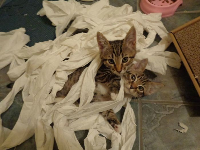 gato y rollos de papel
