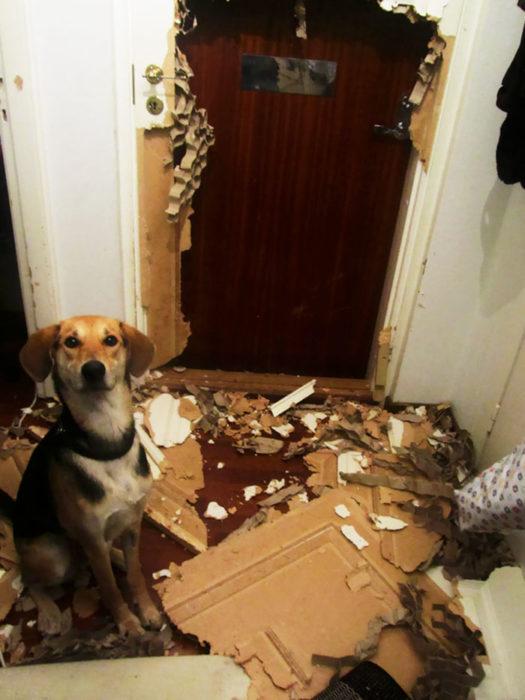perro desbarato puerta