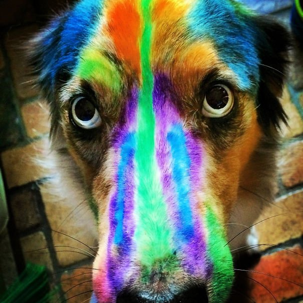 perro arcoíris