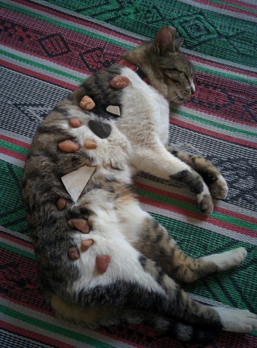 gato con piedras